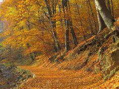 Autumn 5. by FuZoom.deviantart.com on @DeviantArt