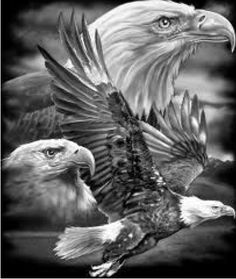 Eagle Images, Eagle Pictures, Beautiful Birds, Animals Beautiful, Cute Animals, Bald Eagle Tattoos, Adler Tattoo, Eagle Drawing, Harley Davidson Art