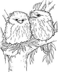 tawny frogmouth coloring page