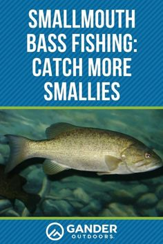 Smallmouth Bass Fishing: Catch More Smallies - Most anglers love fishing for smallies all across the country. At one time, you could only find sma - Bass Fishing Tips, Fishing Guide, Carp Fishing, Ice Fishing, Trout Fishing, Kayak Fishing, Fishing Tackle, Saltwater Fishing, Fishing Tricks