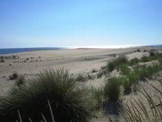 Plage de la Côte Sauvage près du phare de la Coubre, sur la commune de La Tremblade | Pays Royannais Charente-Maritime Tourisme #charentemaritime | #plage | #LaPalmyre | #cotesauvage
