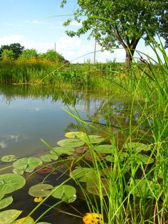 Design and Construction of a Thriving Pond Habitat