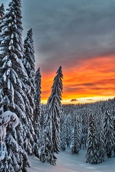 Colors of the Winter - Snowy mountain forest at sunrise