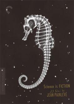 sea horse skeleton