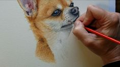 Watercolor paintings - How to Paint a Chihuahua Dog in Watercolor – Watercolor paintings Watercolor Paintings Of Animals, Animal Paintings, Watercolor Video, Watercolor Art, Art Sketches, Art Drawings, Cute Animal Drawings, Dog Portraits, Dog Art