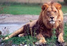 Lion Country Safari Coupons & Discounts   Florida Deals   2014