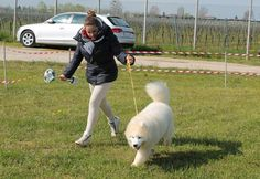 And the winner of the puppy category is this samoyed pup! / Vincitrice dei cuccioli, questa samoied!