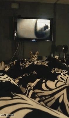 Funny cats - part 193 (40 pics + 10 gifs)