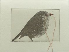 original etching of a bird ,hand pulled