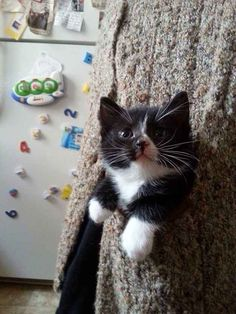 And this pocket kitten who just took paws to the next level of cuteness.