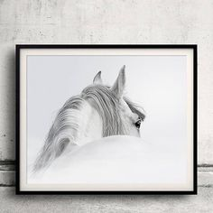 Animals Picture Wildlife Canvas Artwork - White Horse Graphic Art Prints for Wall Decor White Canvas Art, Canvas Artwork, Canvas Wall Art, Canvas Prints, Wall Mural, Wall Decor, Framed Wall, Art Prints, Paintings