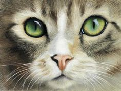 Cat Eyes by Heather A. Mitchell Colored Pencil ~ 11 x 14