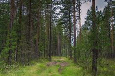 Лесная дорога. by baranduk5818 via http://ift.tt/2gZ1udz