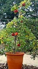 Guide to Planting Trees in Containers