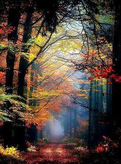 """Dᴏɴ & # ᴛ."", Renamonkalou: Secret Places … – Miracles from Nature Beautiful World, Beautiful Places, Beautiful Forest, Beautiful Scenery, Landscape Photography, Nature Photography, Photography Tips, Adventure Photography, Animal Photography"