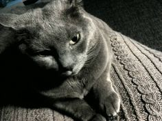 Rita Blyerts #chat #cats_of_instagram #cat #grey