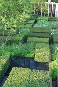 Garden Design Ideas & Inspiration : The Daily Telegraph garden by Christopher Bradley-Hole Modern Landscaping, Landscaping Plants, Garden Show, Dream Garden, Formal Gardens, Outdoor Gardens, Topiary Garden, Planting Shrubs, Classic Garden