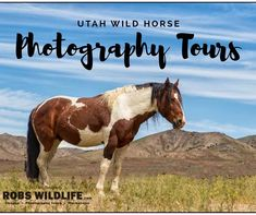 Working on a blog post about yesterday. What would you like to learn about the wild horse photo tours . . . #wildhorsepc #utahphotographer #utahisrad #utahisrad #wildhorses #wildlifeaddicts @experienceutah @visitutah #visitutah #canon #biting #splendid_animals #excellent_nature #equestrian #fighting #animal_elite #allunique_pro #nature_sultans #instagood #instanature #igrefined #horsestagram #horsesofinstagram #HorseForever #horsepower