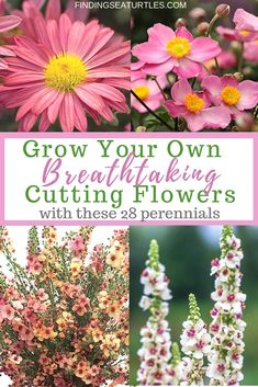 Grow Your Own Breathtaking Cutting Flowers with these 28 Perennials . - Garden Care, Garden Design and Gardening Supplies Growing Flowers, Cut Flowers, Spring Flowers, Planting Flowers, Fresh Flowers, Growing Herbs, Exotic Flowers, Tropical Flowers, Purple Flowers