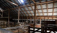 The maze of the woolshed