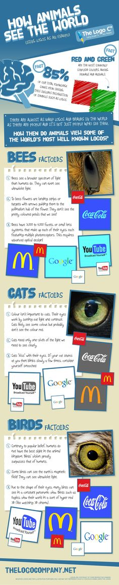 How Animals See The World infographic. Shows how anumals view some of the world's best-known logos such as McDonalds and Google.