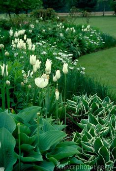 .Love these flowerbeds full of all white flowers and touches of the green and white tipped Hostas.Lovely