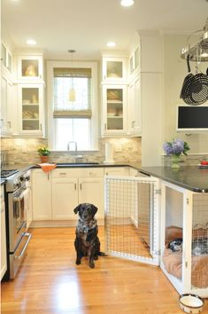 color scheme: white cabinets, dark counters, backsplash  puppies