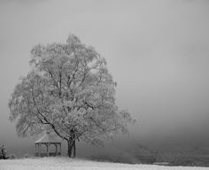 Winter. When the land seems so quiet...so peaceful.