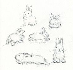 Rabbit sketches | How to draw a bunny
