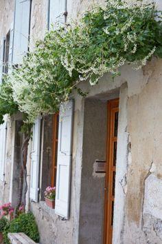 Snel een muur of schutting bedekken met een prachtig bloeiende klimplant? De bruidssluier (Fallopia) groeit enorm snel!