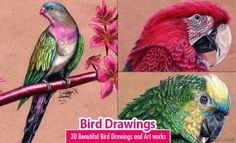 30 Beautiful Bird Drawings and Art works for your inspiration. Read full article: http://webneel.com/bird-drawings | more http://webneel.com/daily | Follow us www.pinterest.com/webneel