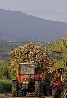 Saint-Andre. Transport des cannes à sucre