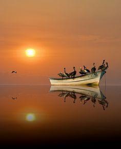.Barca con aves flotando placidamente en el agua. y el sol que presta el color a todo el entorno. .