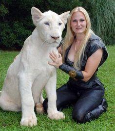 White blue eyed liger
