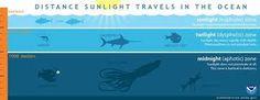 نتيجة بحث الصور عن aquarium infographic