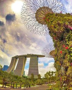 Gardens by the Bay Photo by @ivanaljubas by awesomedreamplaces https://www.instagram.com/p/BAKhuYdFNg6/ via https://scontent.cdninstagram.com/hphotos-xat1/t51.2885-15/e35/10616890_977695038963278_1557489727_n.jpg