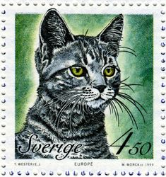 European cat - Postage stamp designed by Eva Jern after photograph and engraved by Martin Mörck, issued by Sweden on March 18, 1994