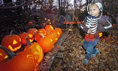 Kayla Knight, 2, looks at some of the jack-o'-lanterns at the New England Wildlife Center in Weymouth on Friday, Oct. 26, 2012. AMELIA KUNHARDT/The Patriot Ledger, Purchase this photo, $8