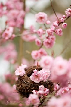 Pink cherry blossoms and a bird's nest -- spring! Spring Is Here, Hello Spring, Spring Time, Terre Nature, Frühling Wallpaper, Pretty In Pink, Beautiful Flowers, Spring Blossom, Spring Has Sprung