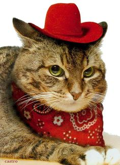 93ba0caf3f3 Cats in Hats - Amazing Adorable Pictures of Cats Wearing Hats. From top hats  to flat caps