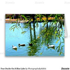 Four Ducks On A Blue Lake Greeting Card