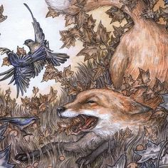 regram @adamoehlers A detail of my new piece 'Squabble' for my upcoming show 'The Wilerlands' with the good folks at @havengallery #adamoehlersillustration #classicillustration #foxart #havengallery #wilderlands