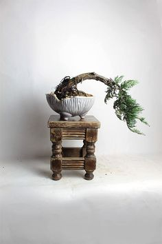 "Blue Rug Juniper Bonsai Tree ""Spring Shohin Collection""by LiveBonsai Tree by LiveBonsaiTree on Etsy"