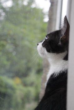 """akiraneko: """" Kitty. (by SophieCheverst) """""""