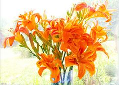 Double orange daylilies, a spectacular weed!. This photo is perfect for those who love color or want to instantly brighten a room. Sizes: 4 x 6, 6 x