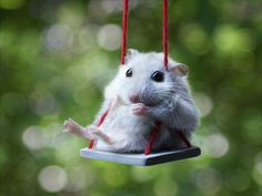 just swinging by