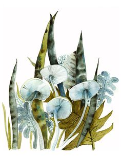 LOVE  all of her work !!!  Woodland -archival print, contemporary botanical  ETSY Shop  amberalexander  Original paintings, prints and cards