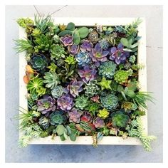 25 Indoor and Outdoor Succulent Gardens Of All Sizes ❤ liked on Polyvore featuring home, outdoors, outdoor decor, garden patio decor, outdoor garden decor, outside garden decor and outdoor patio decor