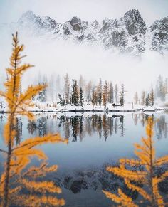 Fresh snowfall and golden larches. What could be sweeter? PC: Ambassador @scott_kranz at Alpine Lakes Wilderness⠀