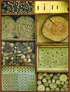 insect hotel  Hardware mesh used to protect from birds, and helps keep small pieces in.  Lay open ended pieces, bamboo etc in groups inside larger metal pipe - helps keep heat.  Mix it up.  Hole size etc.